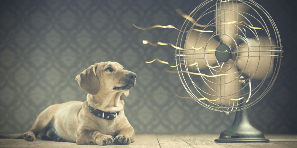 dog in front of fan - air conditioning repair